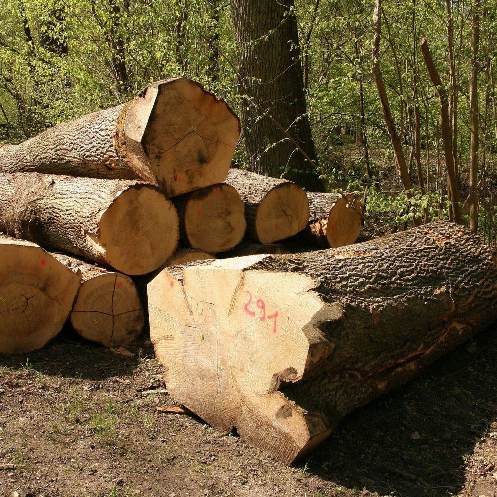 Rohstoff Holz. Nachhaltige Instandhaltung und Schonung von Ressourcen. Wie Sie bei steigender Holzknappheit und Lieferengpässen Ressourcen schonen und Kosten sparen. Holzreparatur für Profis.