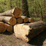 Holzknappheit: Holz reparieren statt austauschen